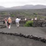 Canarias en busca del 'agroenoturismo'