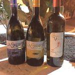 Presentados los vinos de Bodega Malpaís de Máguez