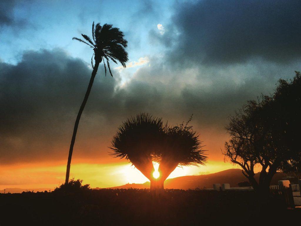 Imagen de la palmera de El Grifo